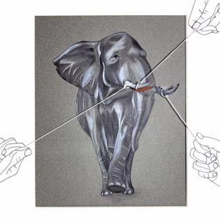 Olivia Regan - Asian Elephant